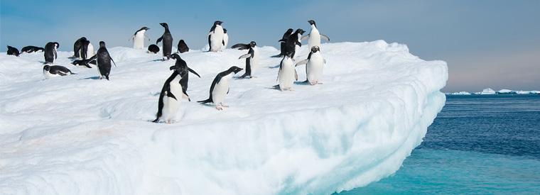 Görsel: Antarktika | Viator