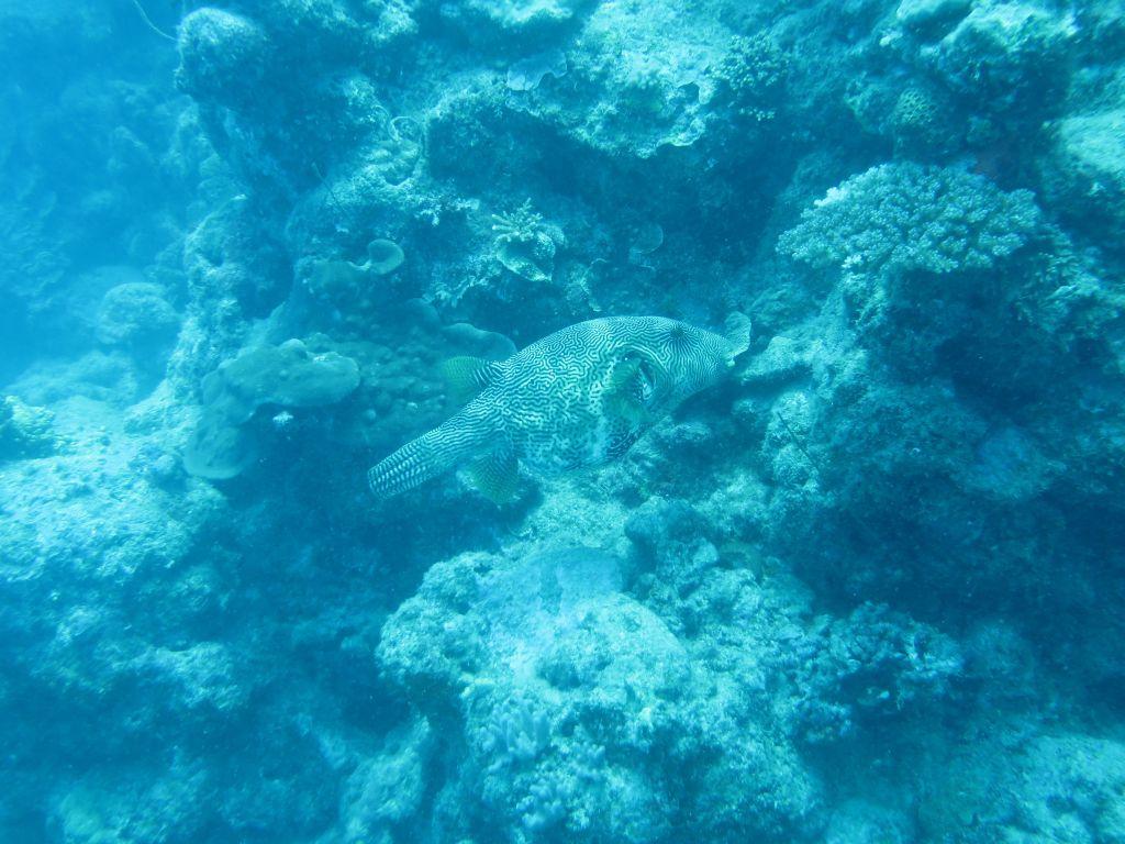 Resiflerde